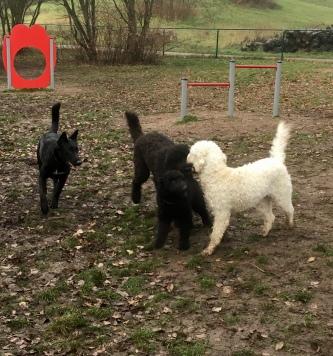 Esme, Buddy, Bella och Saga