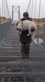 Gallerbron känns i tassarna, man får hjälpas åt....