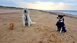 Putte, Charlie och Pedro på härlig promenad på stranden.
