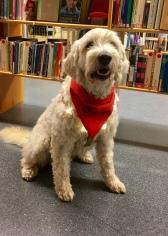 Charlie på Vallås bibliotek i juletider