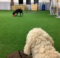 Charlie kollar in när hans kompis Sienna jobbar.