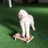 Charlie med tassar på rullbrädan. På kurs hos Marie- Dogs of Sweden