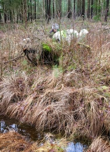 Över diken och under buskar gömmer sig figgarna. Bra träning även för oss tvåbenta. Här har Charlie hittat någon.