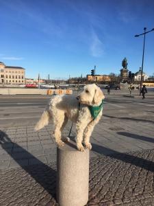 Charlie i Stockholm
