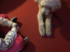 Godis ligger på tassen och Charlie väntar på -Var så god! från eleven.