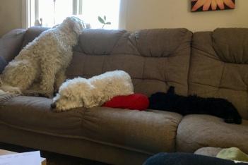 Charlie, Saga och Ellen hemma i soffan