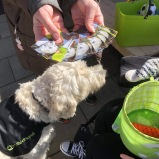 Fix och tricks efter promenaden med Vårdhunden