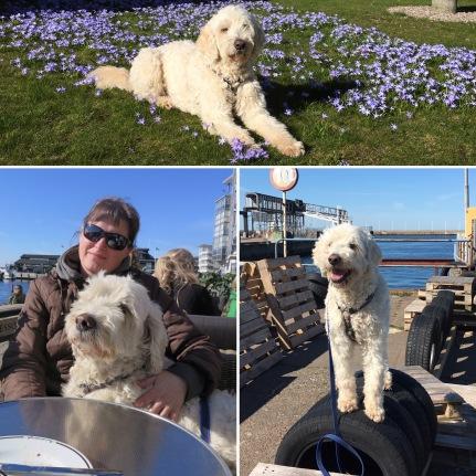 Charlie och jag var i Helsingborg och tränade med Dogs by Marie of Sweden och knöt ihop säcken med fika i solen på Espresso house.