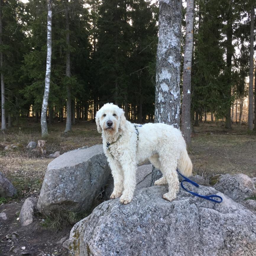 från vår morgonpromenad i Mullsjö