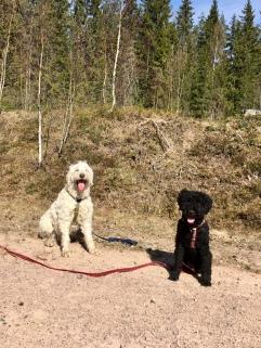 Charlie och Pluto på lunchpromenad