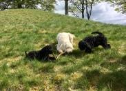 Charlies pinne var den allra finaste, Ellen och Rufus mycket impade