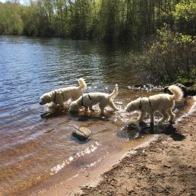 Charlie, Saga och Dacke i kanten på sjön