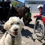 Vårdhund och vårdhäst