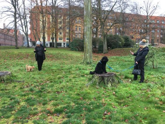 Rufus poserar på stubben och Tintin väntar på sin tur