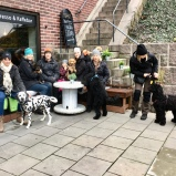 Min första valpkurs miljötränar i stan, bilden tagen vid hundvänliga Cortado coffeshop