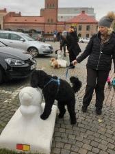 Lite träning vid laxarna på Lilla torg. Rufus, Tintin och längst bak skymtar Ellen