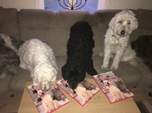 Lucköppning med otåliga vovvar när Ellen kom hem med varsin kalender