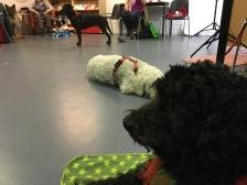 Många fina hundar och bakom Ellen ligger kompis Meja.