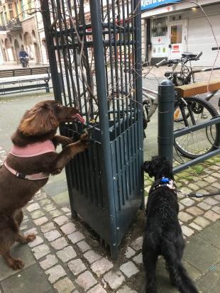 Ljuvliga Smilla med sin fina dotter Bella letar godis, både mjukost och frolic. Nosaktivering på stan.